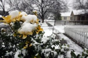 Snow in Austin